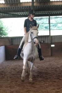 KS Riding Horse